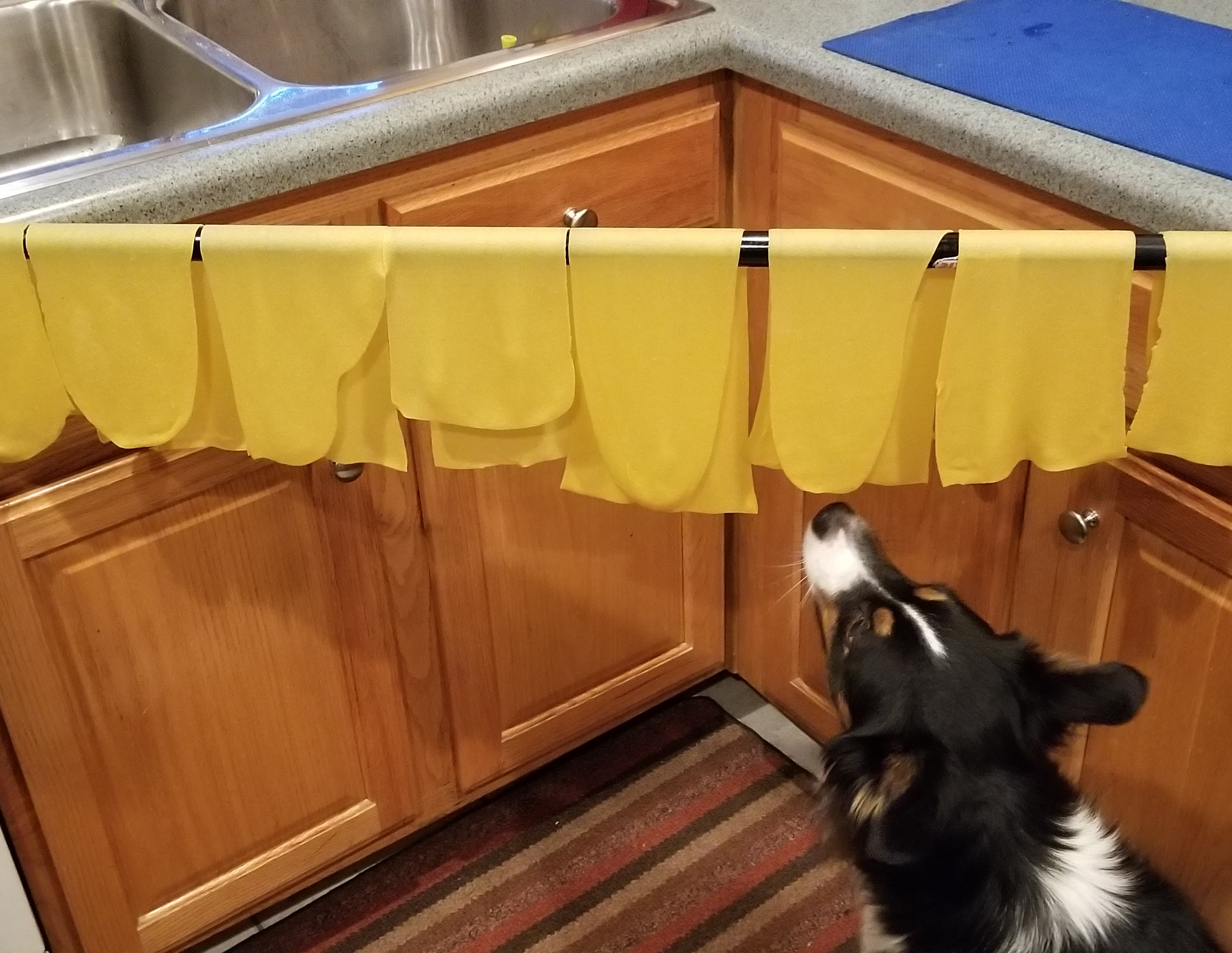 Ryder checking out our rolled pasta